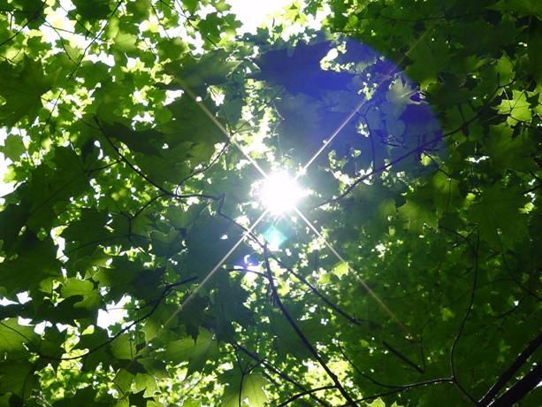chlorophyll-leaves